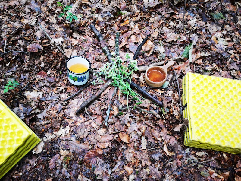 Natur Coaching im Wald